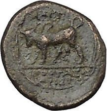 Magnesia ad Maeandrum in Ionia 300BC Horseman Bull Ancient Greek Coin i50532 https://trustedmedievalcoins.wordpress.com/2015/12/29/magnesia-ad-maeandrum-in-ionia-300bc-horseman-bull-ancient-greek-coin-i50532/
