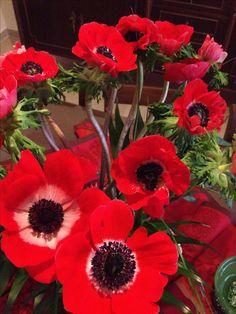 Gorgeous red Anemones