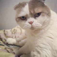 なに見てんだよ(Д)おいらの顔がオニギリみたいだって by @urantoatomu cat enclosures  cat cats kitty cute catlover catsofinstagram catcam instacat catstagram catsagram lovecats cat product reviews