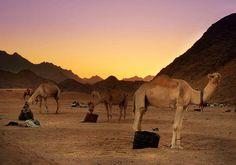 Egypt more than country with All Tours Egypt enjoy Safari tours in hurghada  http://www.alltoursegypt.com/tours/safari_desert_in_hhurghada-119-43.html