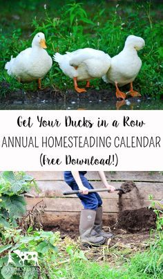 Get your ducks in a row! Create an Annual Homesteading Calendar to get your farm organized in the new year!: