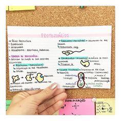 BIOLOGIA - PROTOZOÁRIOS/DOENÇAS DE PROTOZOÁRIOS Mental Map, Study Organization, Biochemistry, Studyblr, Study Notes, School Hacks, Student Life, Biology, Bullet Journal