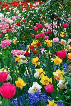 ~~ springtime ~~