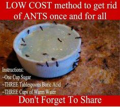 Lost cost method to get rid of ants once and for all. 1 c sugar 3 tbsp. boric acid 3 c warm water Ant Remedies, Home Remedies, Natural Remedies, Ant Problem, Diy Pest Control, Bug Control, Black Ants, Boric Acid, Get Rid Of Ants