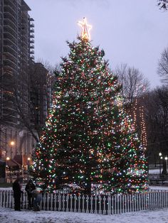 Boston Common Christmas Tree, Boston, Massachusetts