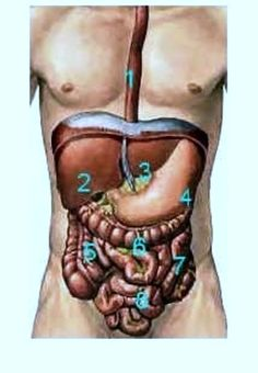 Ένας πλήρης αλγόριθμος σκέψης για τα πλέον συνήθη αίτια του πόνου!!! Διαχωρίζοντας το σώμα σε διαμερίσματα θα μπορούσαμε εύκολα να προσ...