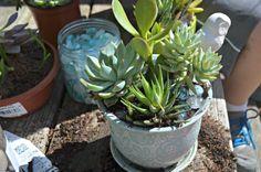 Making Your Own Succulent Garden #DIHWorkshop – Home Depot Gift Card Giveaway