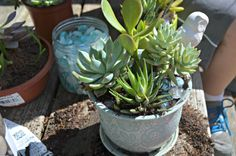 Making Your Own Succulent Garden #DIHWorkshop – Home Depot Gift Card Giveaway