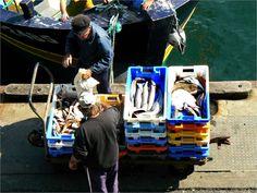 Déchargement du poisson au Guilvinec, Finistère