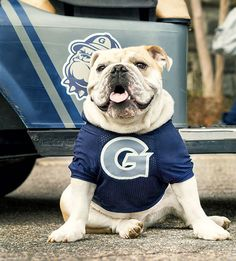 The Making of a Mascot: Georgetown's JJ the Bulldog