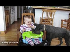 funny baby laughing with dog fun