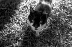 My Photo Cat Runau Photo by Carolina Gonzales -- National Geographic Your Shot