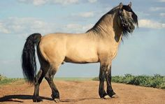 Vyatka horse. An old breed of small draft horse from Russia with Estonian horse ancestry. Though versatile and even-tempered, the modern decline of draft breeds hit it hard. It is on the UN agricultural division's endangered list.