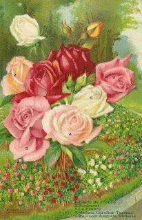 """Rose Catalog listing old Rose Varieties-I can make out;,1.""""Etoile de France""""2.""""Sunburst""""3.""""La France""""4.""""Madame Caroline Testoute""""5.Kaiserin Auguste Victoria"""