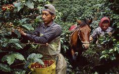 Steve McCurry's story of #coffee at the Milan Museum of Science. In collaboration with Lavazza, 62 shots realized in12 countries: http://bit.ly/steve_mc1  #SteveMcCurry racconta il #caffè al Museo della Scienza di Milano. In collaborazione con #Lavazza, 62 scatti realizzati in dodici paesi: http://bit.ly/steve_mc2