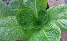 Ζεολιθικά λαχανικά. Γιώργος Αλαμπρίτης. Αραδίππου - Κύπρος