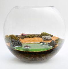 Beach terrariums