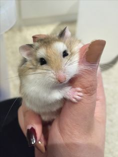 Super Cute Animals, Cute Little Animals, Cute Funny Animals, Robo Dwarf Hamsters, Funny Hamsters, Baby Hamster, Hamster Care, Cute Moth, Cutest Animals On Earth