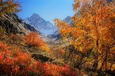 Majestic Autumn by FlorentCourty on deviantART ~ Mt. Olan, France