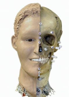 Facial reconstruction is a method used in the forensic field when a crime involves unidentified remains. Facial reconstruction is usually performed by a sculptor who is an expert in facial anatomy. This sculptor could be a forensic artist but it's… Biological Anthropology, Forensic Anthropology, Forensic Psychology, Forensic Science, Detective, Forensic Facial Reconstruction, Forensic Artist, Body Farm, Forensic Files