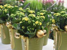 #FlammendesKätchen #Kalanchoe #blossfeldiana #Kätchen #Dekoration #Zimmerpflanze #Erlebnisgärtnerei #Hödnerhof #Ebbs #Mils #Dez #Innsbruck #Eigenproduktion #Jungpflanzen #Weihnachten #Winter #DIY #Floristen #Kreativwerkstatt Kalanchoe Blossfeldiana, Amaryllis, Winter Diy, Innsbruck, Herbs, Poinsettia, House Plants, Weihnachten, Creative