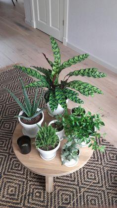 Cluster je planten ♡