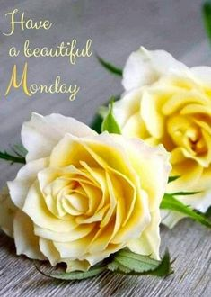 Good Monday Morning, Good Morning Good Night, Good Morning Wishes, Happy Monday, Beautiful Day, Beautiful Flowers, Good Morning Animation, Roses Only, Good Morning Friends Quotes
