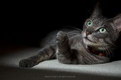 Top Pet Model