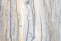 Driftwood Detail Wall Mural, custom made to suit your wall size. Custom design service and express delivery available.