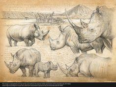 198 HH Big five White rhino © marcello