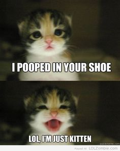 I pooped in your shoe. LOL, I'm just kitten.