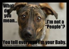 I swear this is what my dog is saying to me....To me, they are people!....