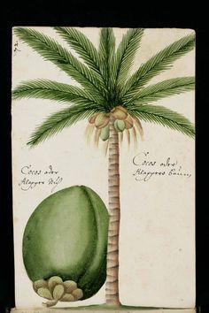 """St. Gallen, Stiftsbibliothek, Cod. Sang. 1311, p. 319 – """"Journal de voyage"""" de Georg Franz Müller, un voyageur alsacien"""