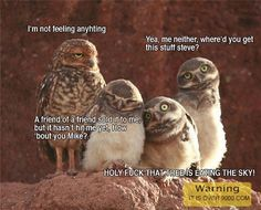 ROFL, this is funny Owl