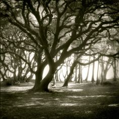 Real and most beautiful tree pictures from around the world. All these are HD images so you can clearly see the beautiful of nature and trees Art Gallery, Tree Photography, Surrealism Photography, Artistic Photography, Photography Women, Landscape Photography, Black Tree, Deviantart, Amazing Nature