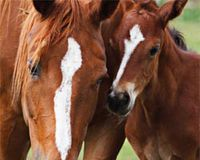 Update about 'END THE SLAUGHTER OF ALBERTA'S WILD HORSES!'