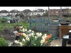 Sean's Allotment   Relfecting on April   thehortchannel.com
