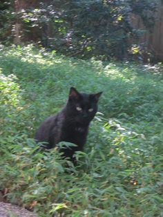 Vampy in the pretty green grass.