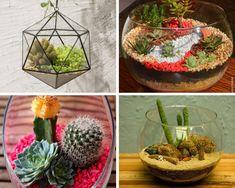 Como cuidar de cactos Cactus Plants, Terrarium, Blog, Pasta, Gardening, Cactus Types, Succulent Terrarium, Succulents Garden, Cactus Terrarium