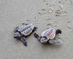 Hot Chicks, Cool Dudes: it's Turtle Season!