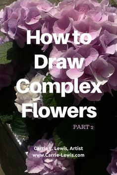 Part two in a series showing how to draw complex flowers. The subject is a hydrangea, but this method will help you drawing any complex flower.