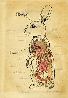 anatomy,animal-84f745b2adeb65d39932b4dfd55c6aa8_h.jpg (346×500)