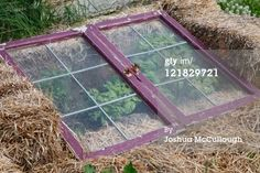 5 Plants That Defy the Snow ~ Cold Frames In the Garden | Deep Roots at Home