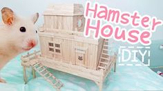 diy hamster - YouTube