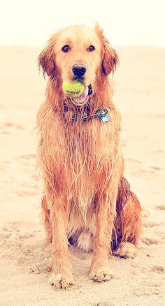 beach dog.