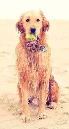 beach dog.... Check more at http://hrenoten.com