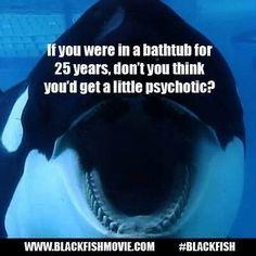 Si estuvieras en una bañera por 25 años... no crees que también te volverías un poco psicótico?? #blackfish you tell em'!! BOYCOTT SEA WORLD AND ALL OTHER PLACES THAT HOLD MARINE LIFE CAPTIVE!!!!