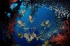 Marine Marvels: Spectacular Photos of Sea Creatures | Underwater Photography Contest Winners 2012 By Mark Fuller