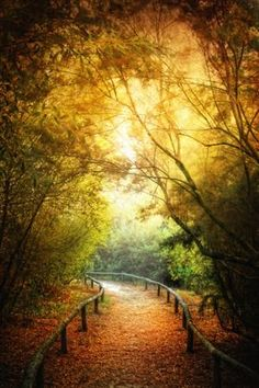Fall Pathway | Andalusia, Spain Photo credit: Zú Sánchez on Flickr