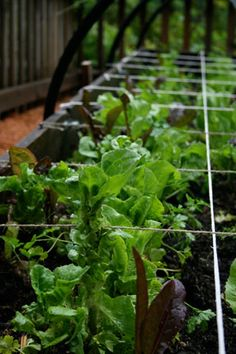7 Simple Strategies For A Successful Beginner Vegetable Garden - http://www.ecosnippets.com/gardening/7-simple-strategies-for-a-successful-beginner-vegetable-garden/